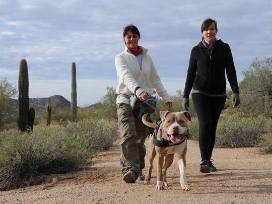 An adoptable dog struts his stuff during a Wag & Walk