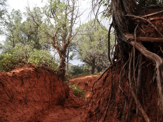Roots protrude from the red dirt during the first part