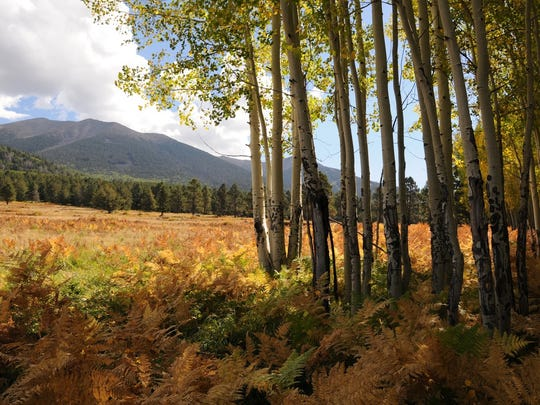 The San Francisco Peaks can be seen from the Wilson Meadow hike north of Flagstaff.