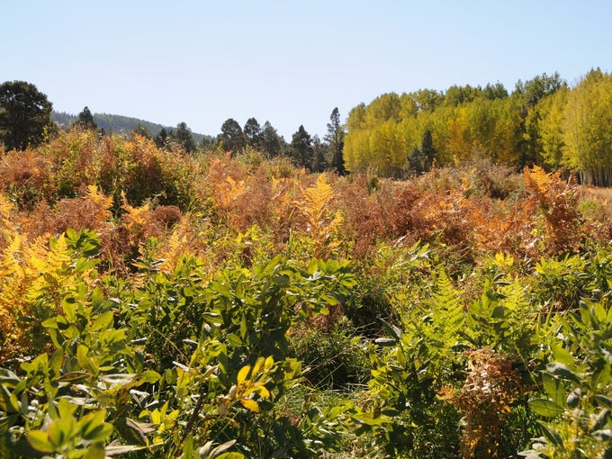 Wilson Meadow north of Flagstaff is an easy scenic