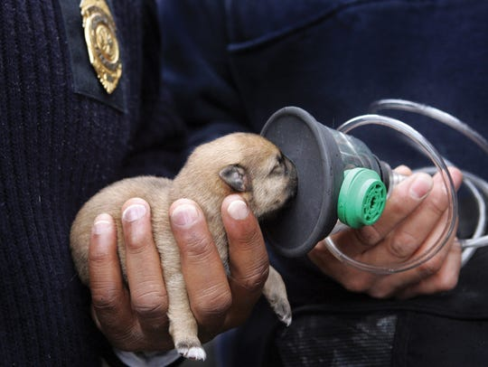 Pet oxygen masks, which fit snugly to the animal's