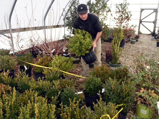 Chris Combs lifts a plant while working at Combs Landscape and Nursery on North Burkhardt Road in Evansville Thursday.  Combs is retiring after 35 years of owning the business.