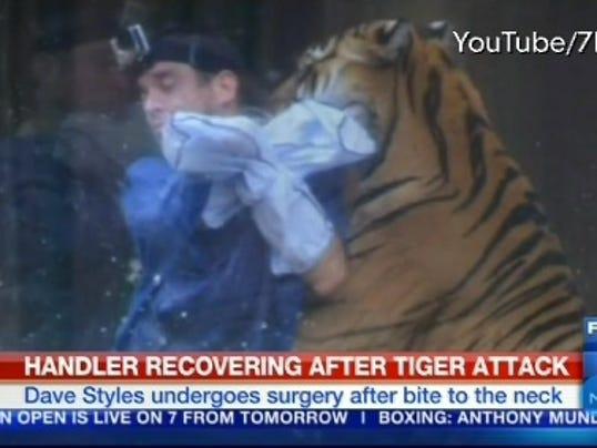 Tiger bites trainer