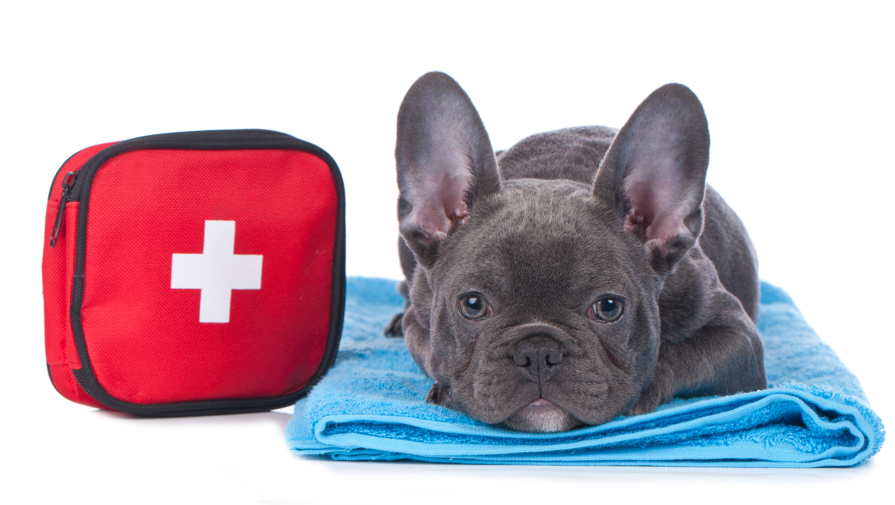 Week 18: Furry friends need first aid too