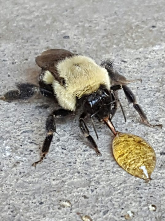 ITH-Bee-eating-honey.jpg