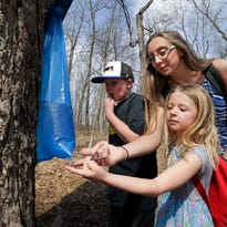Maple tapping workshop on tap at Wehr Nature Center in Franklin