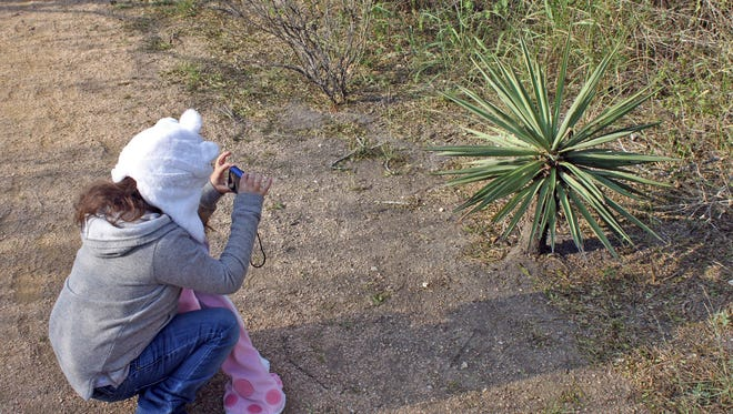 Wildlife in Focus has  scheduled its Winter Wildlife Camp for ages 7-14 for 9 a.m. to noon Dec. 18-21 at the Oso Bay Wetlands Preserve.