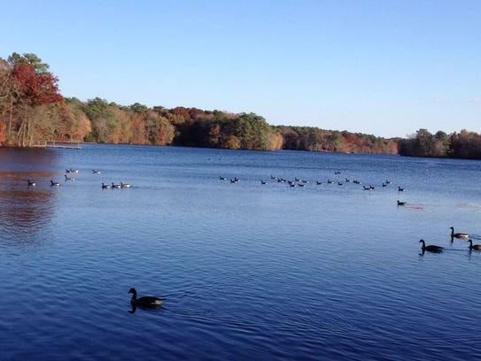 Trap Pond State Park is a popular camping destination.