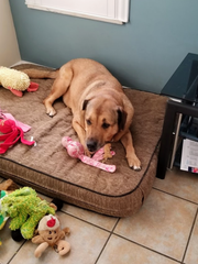 Chloe in her new home, surrounded by her favorite toys.