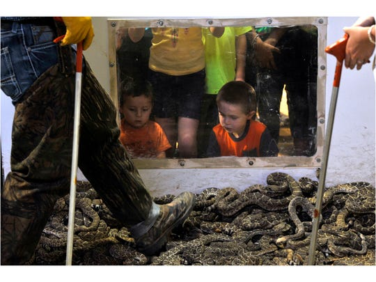 Children watch through a Plexiglas window March 10 as Jaycees use their feet to sweep rattlesnakes across one of the pits at the World's Largest Rattlesnake Roundup in Sweetwater. This was the 60th year for the event.