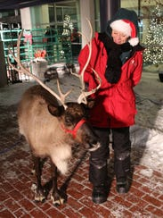 Live reindeer make frequent appearances at Christmas