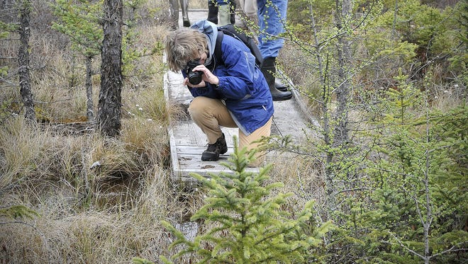 Carol Hoyem of Bemidji photographs low-growing plants in May at Aitkin County's Long Lake Conservation Center during the Minnesota Master Naturalist spring conference.