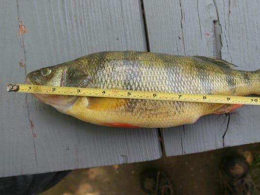 0626 Fish Story