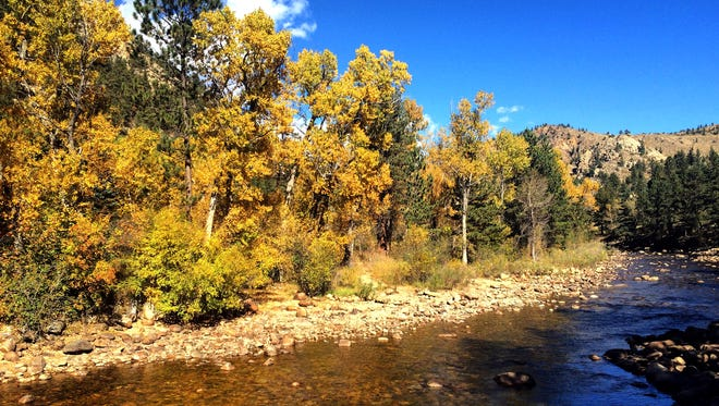 Aspen trees along the Poudre River show their fall colors in late September. Go see the fall colors now as they reach their peak.