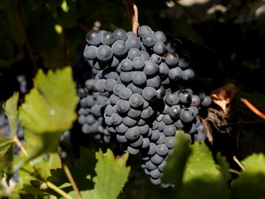 Grapes in warm climates ripen more quickly, resulting in higher sugar content, thus higher alcohol and less acidity. They often have thicker skins, thus greater tannin.