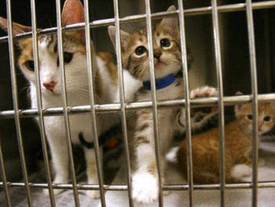 Cats at the Thousand Palms Animal Campus of the Riverside County Department of Animal Services are shown in this file photo. Palm Desert will be expanding its pet adoption fee reimbursement program to include animals obtained the county shelter in Thousand Palms, Animal Samaritans and any nonprofit shelters within the city.