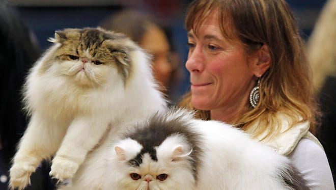 Brigitte Pouliot of Montreal, Canada shows off her cats, Anouchka Juliette  and Anouchka Josephine at last year's Westchester Cat Show. This year's show is on Aug 8 and 9 at Iona College.