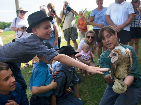 Susan Klugman holds out a barn owl for visitors to see at the East Berlin farm where they are nesting on Thursday, July 7, 2016. Krugman was assisting her husband, Karl Kleiner, who banded a total of five owls and educated the crowd on the species.