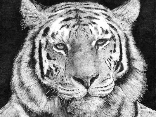 636638088847136506-Tiger-Close-Med.jpg