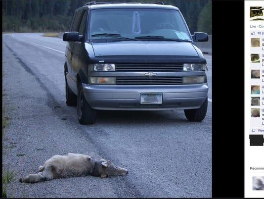 0919 Wolf kill