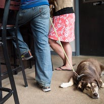 Dog owner's guide to Fort Collins