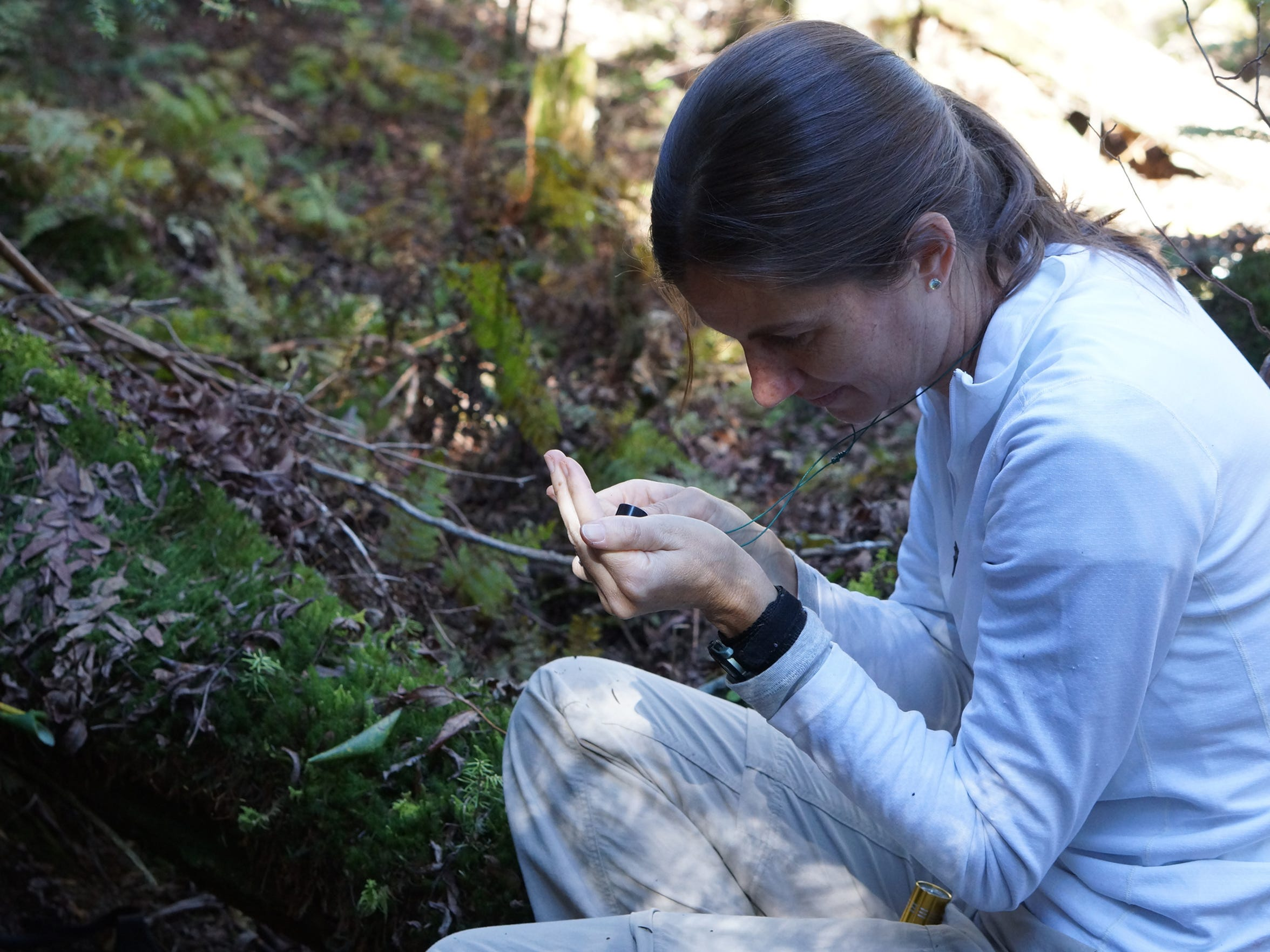 U.S. Fish and Wildlife biologist Sue Cameron holds the endangered spruce-fir moth spider, found only on high elevation rock outcrops.