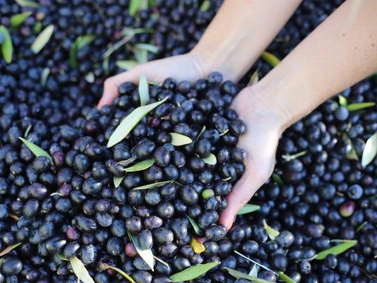 Jordan-Winery-Olives.jpg