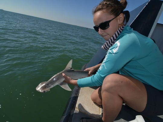 Eloise Cave is a Ph.D. student and marine biologist at Florida Tech's Shark Conservation Lab.