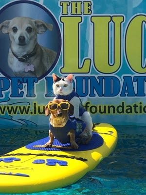 Specially-trained animals from The Lucy Pet Foundation ride the waves at an Orange County event in early 2017.