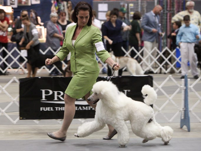 The 42nd Cottonland Cluster of Dog Shows continues Saturday at the Monroe Civic Center. The event, sponsored by the Bayou Kennel Club/Vicksburg Kennel Club, includes four all breed dog shows and 23 specialty dog shows.