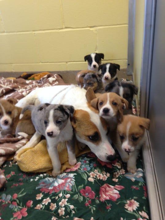-Puppies 2.jpg_20140612.jpg