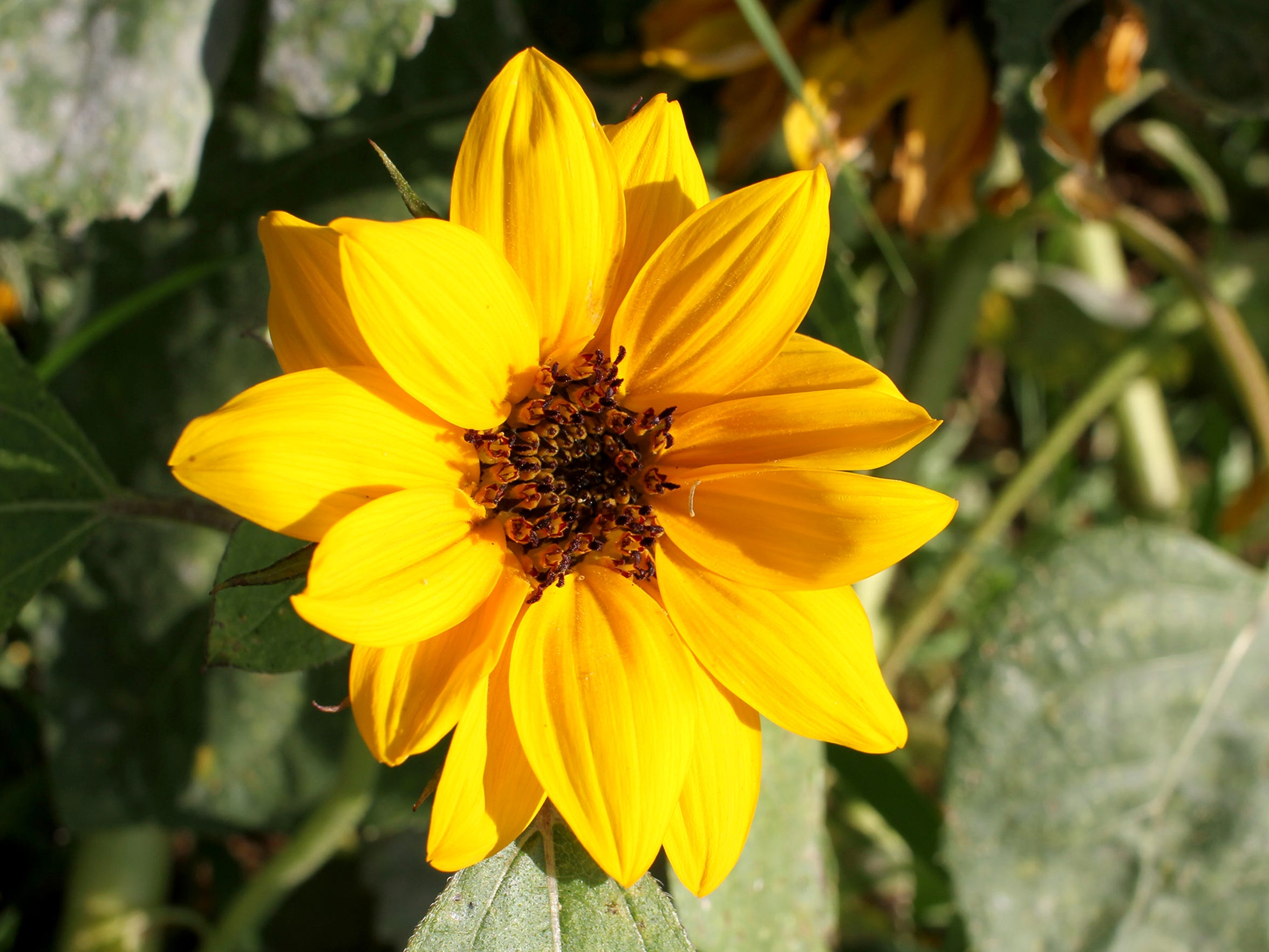 Gilbert Creek Gardens in Burkburnett is a sustainable flower farm where you can find such blooms as sunflowers, sweet peas, zinnia and bachelor buttons, to name a few.