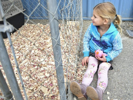 Addison Coz, 4, admires the rabbits up for adoption