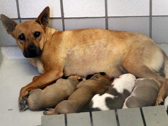 A shelter dog feeds her pups inside the city's Animal
