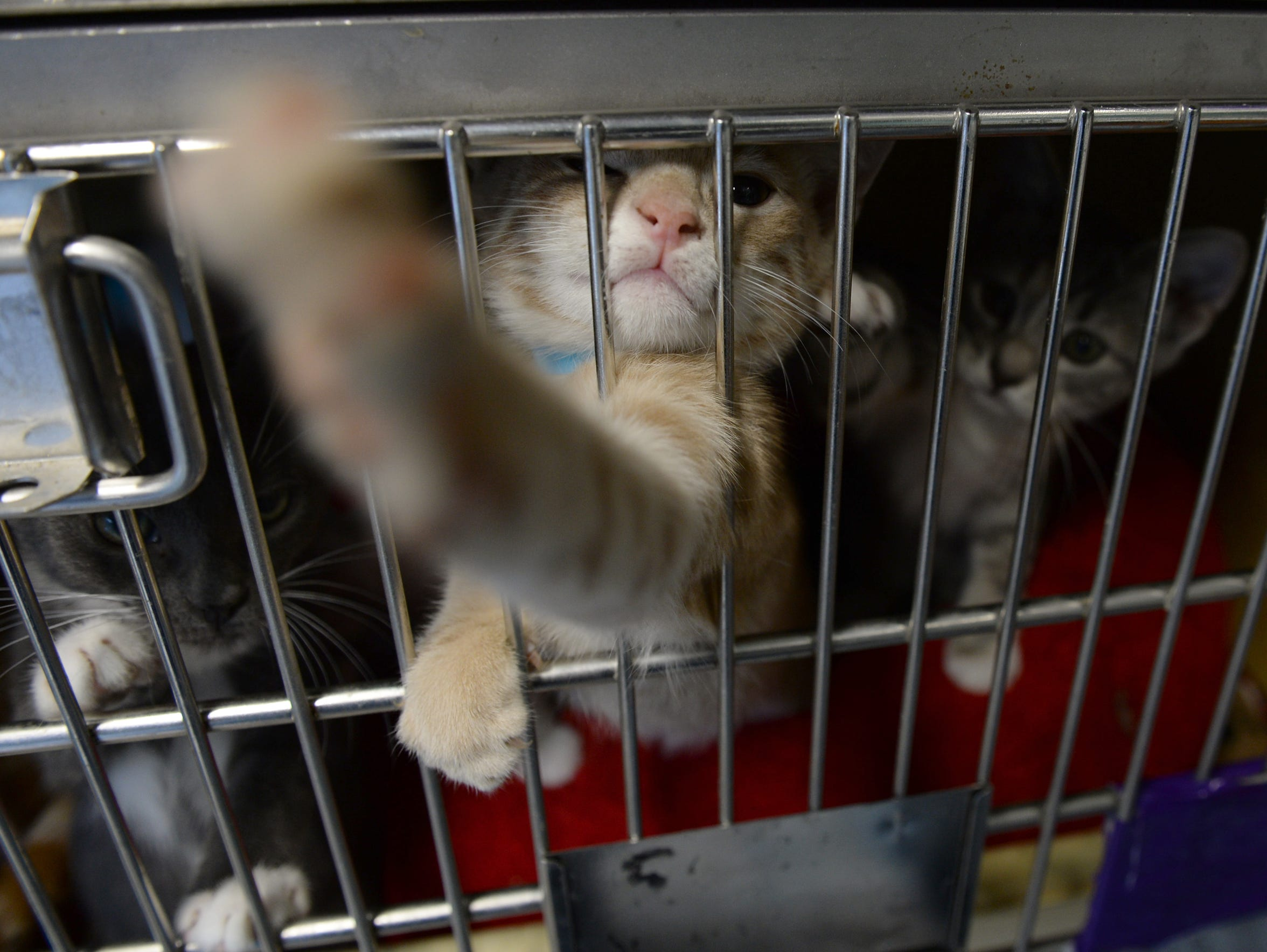 With the help of volunteers 48 kittens are transported
