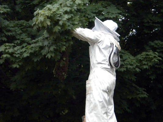 Beekeeper (4).jpg