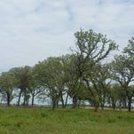 DNR: Some trees must fall for important prairie habitat