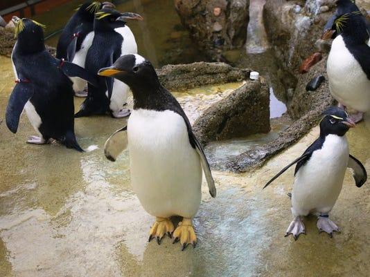 2 sok penguin.jpg