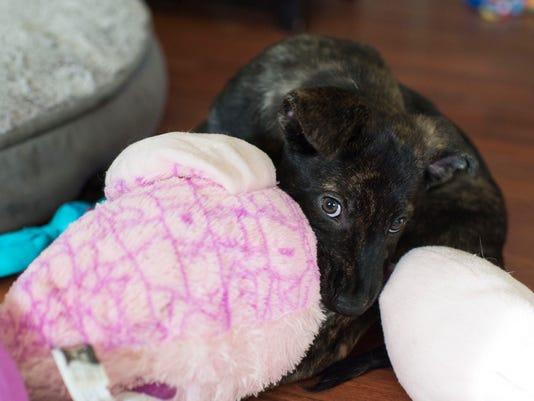 New Life Animal Rescue