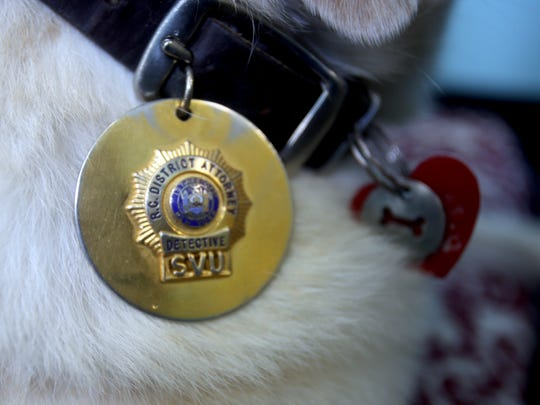 Lily, an eight year-old Yellow Lab wears Rockland County District Attorney's badge. Lily is a trained therapy dogs that the unit uses to make children who are being interviewed feel comfortable. Cases involving child sexual abuse are among the most common investigated by the unit, and Lily has been instrumental in helping children who may be victims of abuse feel comfortable enough to testify.