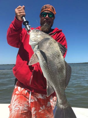 Lagoon anglers can look forward to making casts to schools of black drum like this customer of Capt. Tom Van Horn's Mosquito Coast Fishing Charters did Monday.