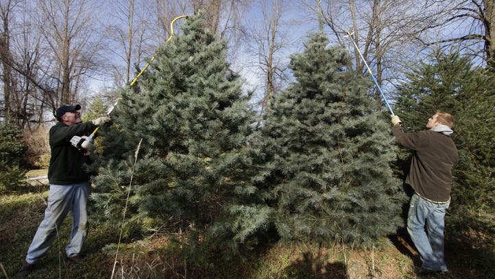 Jim Kunz, left, and his son Joe Kunz, right, trim the tops of Christmas trees  at Kunz's Tree Farm in Webster as they prepare for the upcoming Christmas season in this 2010 photo.  The tree farm has been in the Kunz family since 1949.