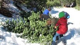 Some children help haul their Christmas tree to the car after their dad cut it down.