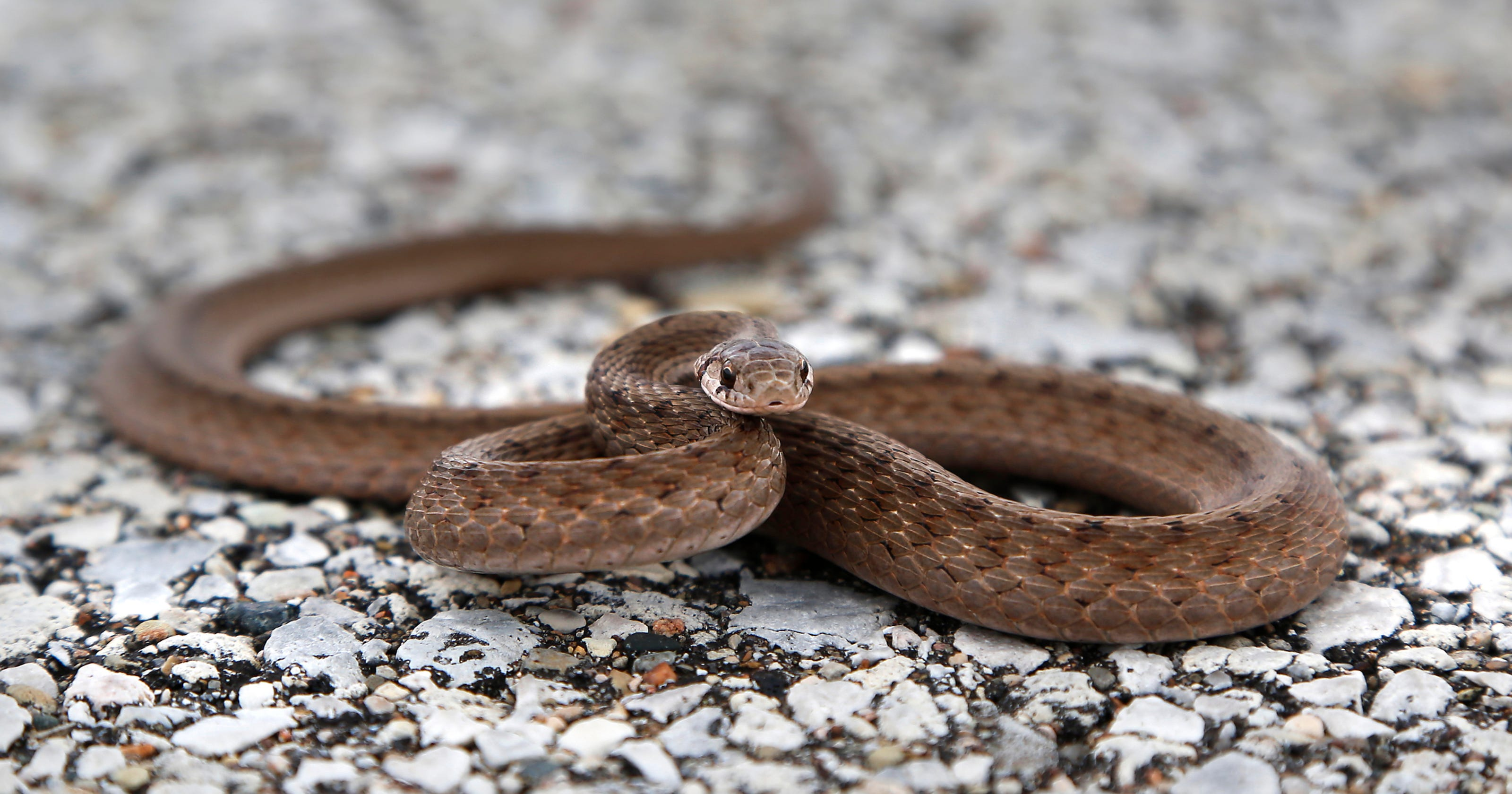 Snake slithers out of car's air vent as Virginia woman is