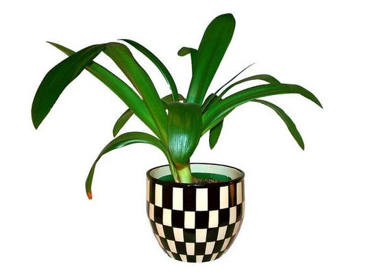 Houseplants add life to your indoor space.