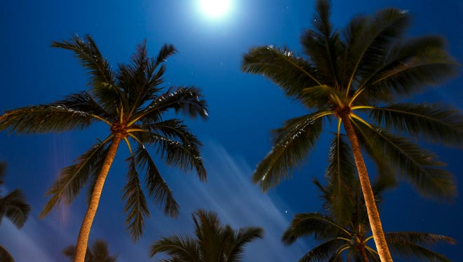 """The crackle of the palm trees ... Over the mooned white roofs of the town..."" -- Lola Ridge  The photo shows a palm tree in moonlight, in Koh Samui, Thailand."