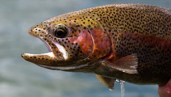 Pennsylvania trout stocking schedules are now available