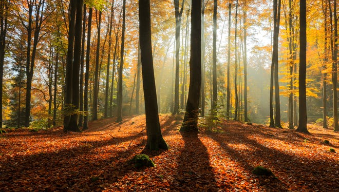 Rays of light in autumn forest
