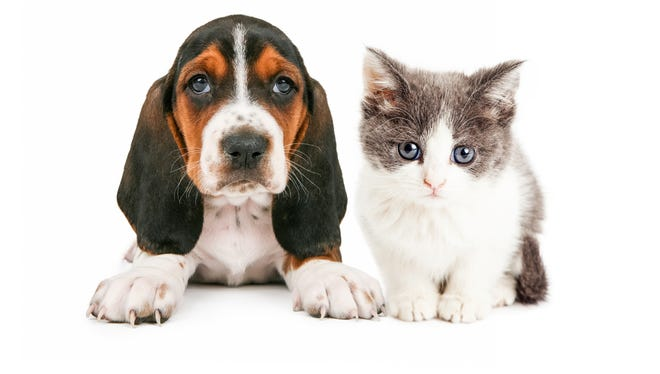 Bradley Farms will host two upcoming low-cost vaccination clinics for cats and dogs.