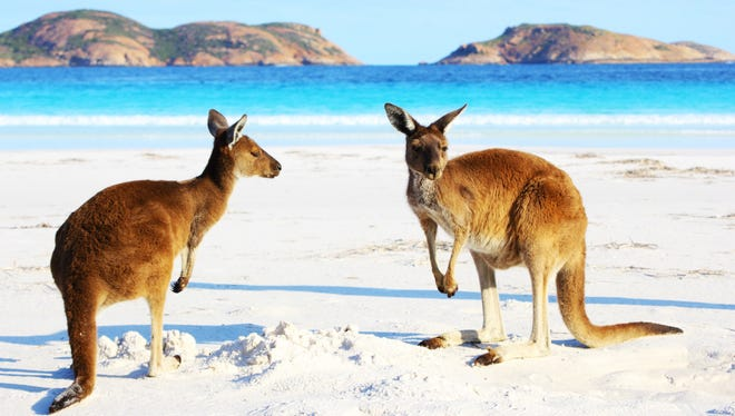 The Avashias' canceled Western Wonderland tour featured visits to Perth and beyond to see kangaroos on the beach, several national parks, and the wine country of Margaret River.